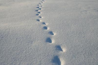 I en andens fodspor